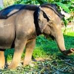 Elephant — Stock Photo #20119331