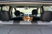 Dog in car — Stock Photo