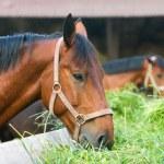 Horse eating hay — Stock Photo #19007429