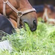 Horse eating hay  — Stock Photo