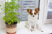 Puppy and flower on window — Stock Photo