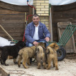 Man with puppies breed Tibetan Mastiff - Stock Photo