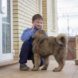 Boy and puppy Tibetan Mastiff - ストック写真