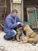 Człowiek z szczenięta rasy mastif tybetański — Zdjęcie stockowe