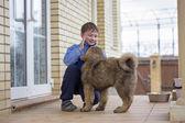 Chłopiec i szczeniaka mastifa tybetańskiego — Zdjęcie stockowe