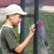 Stock Photo: Boy and parrot