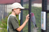 Boy and parrot — Stock Photo