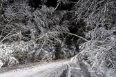 Night road in winter forest — Stock Photo