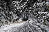 Night road in winter forest — Foto de Stock