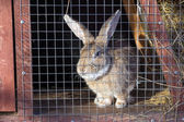 Rabbit in a cage — Stock Photo
