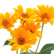 Yellow flowers isolated — Stock Photo