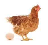母鸡和鸡蛋 — 图库照片