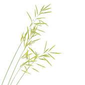 Grass seed stalks — Stock Photo