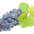 Blue grape with green leaves — Stock Photo