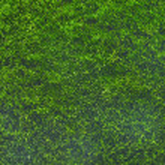 Moss — Stock Photo #30961253