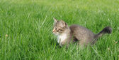 Kitten in grass — Stock Photo