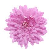 粉红色的花 — 图库照片
