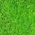 Moss — Stock Photo #37734917