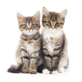 Two small kittens — Stock Photo