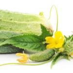Cucumbers — Stock Photo #45072257