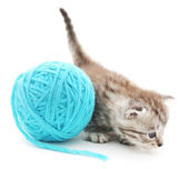Cat with ball of yarn — Stock Photo