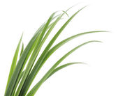 Green grass leaves — Stock Photo