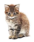 Gatito sobre un fondo blanco — Foto de Stock