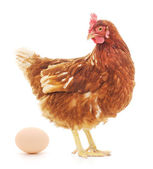 Hen and Egg — Stock Photo