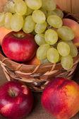 Höstens frukter — Stockfoto