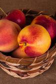 Autumn fruits — Stock fotografie