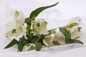 Beautiful white flowers on a white veil — Stock Photo