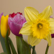 Beautiful spring flowers — Stock Photo #21999745