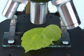 Studying plants with a microscope — Stock Photo
