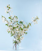 Fleurs blanches de cerisier — Photo