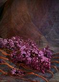 Piękny bukiet bzu — Zdjęcie stockowe