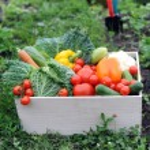 zelenina — Stock fotografie