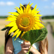 Lovely sunflower — Stock Photo #19110667