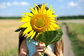 Lovely sunflower — Stock Photo