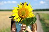 Lovely sunflower — Stock Photo