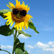 Nice sunflower — Stock Photo