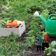 Kitchen-garden — Stock Photo