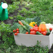 Vegetables in the box — Stockfoto #21501413