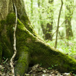 Stock Photo: Old mossy trunk