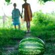 Watermelon is on the trail — Stock Photo