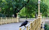 Crow on the bridge — Stock Photo
