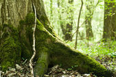 Old mossy trunk — Stock Photo