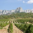 Vineyards at bottom of mountain — Stock Photo