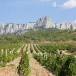 Vineyards at bottom of mountain — Stock Photo #22184727