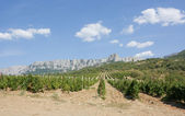 Vineyards at bottom of mountain — Stock Photo