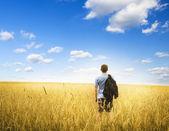 Adam sarı buğday çayır üzerinde. — Stok fotoğraf